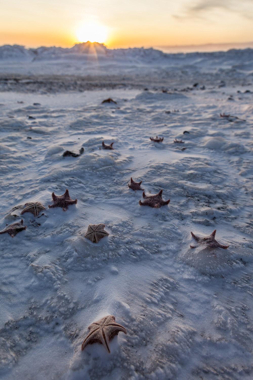 12. Frozen Starfish