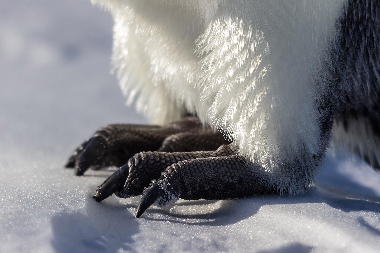 18. Penguin Feet