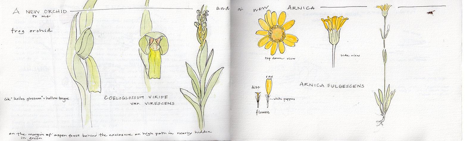 05. Grassland Wildflowers I
