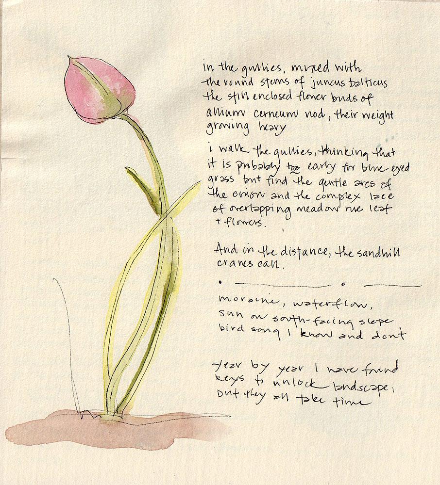 07. Wild Onion