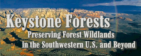 Keystone Forests: Preserving Forest Wildlands in the Southwestern U.S. and Beyond.