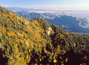 Pinaleño Mountains.