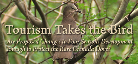 Tourism Takes the Bird: Are Proposed Changes to Four Seasons Development Enough to Protect the Rare Grenada Dove?