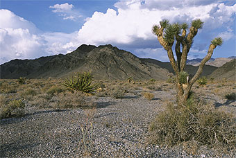 Desert National Wildlife Refuge.