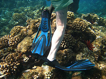 Flipper feet and coral.