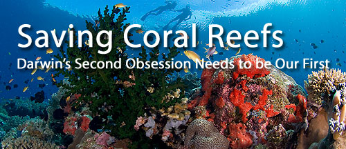 Saving Coral Reefs: Darwin's Second Obsession Needs to be Our First
