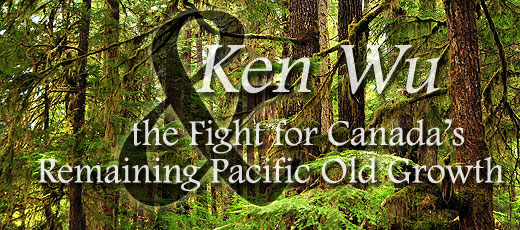 Ken Wu and the Fight for Canada's Remaining Pacific Coast Old Growth