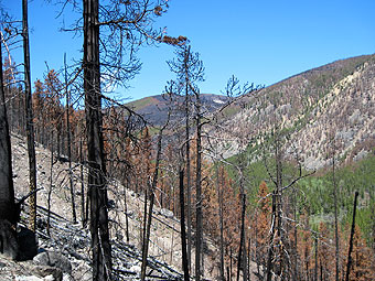 Cascade Fire, one year later