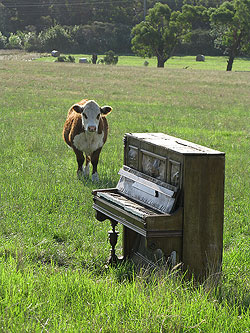 Ruined piano in field with cow.