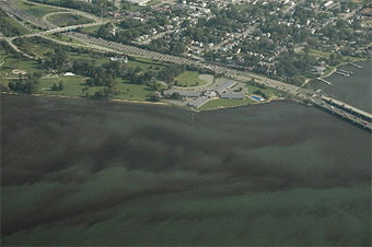 Algae bloom in Chesapeake Bay
