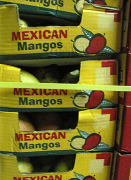Stacks of boxed mangos