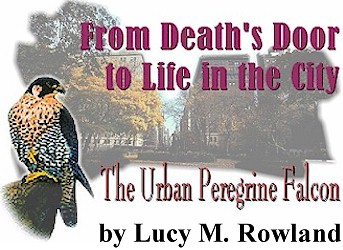 From Death's Door to Life in the City: The Urban Peregrine Falcon, by Lucy M. Rowland