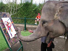 image, Desi the elephant paints.