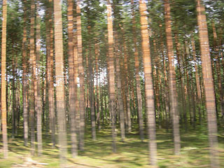 Estonian forest
