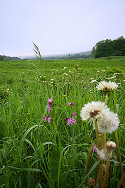 Marshy pasture outside Craftsbury,