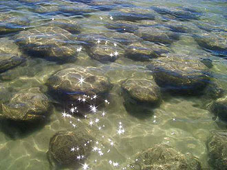 Lake Clifton's living rocks, thrombolites, in high