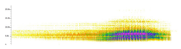 Sonogram of 20 seconds of the song of Tibicen chloromera