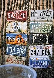 Arizona, Utah, Colorado, and Mexico license plates on ocotillo fence.