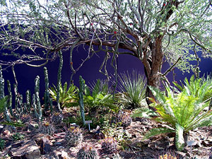 Plants with purple wall at Arizona-Sonora Desert Museum.