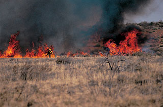 Firefighter and brushland fire.