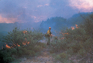 Firefighter in brush fire.