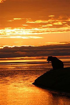Bear near water. Photo by John Hohl.