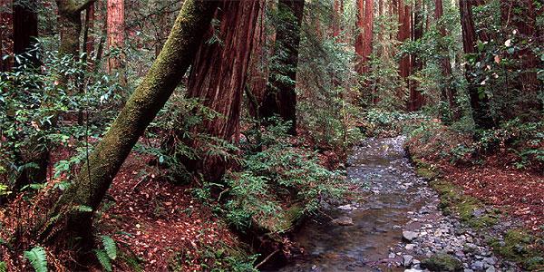 Muir Woods National Monument William Kent S Progressive