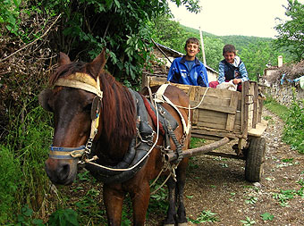 Village boys with their horse and cart.