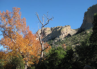 Chiricahua Mountains and sycamore in fall colors.