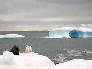 Penguins and seal on floating ice in Antarctica. Photo by Lucy Jane Bledsoe.