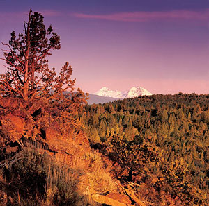 Central Oregon landscape: mountains, evergreens.