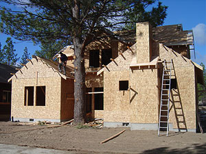 Tree preservation as shown during home construction.