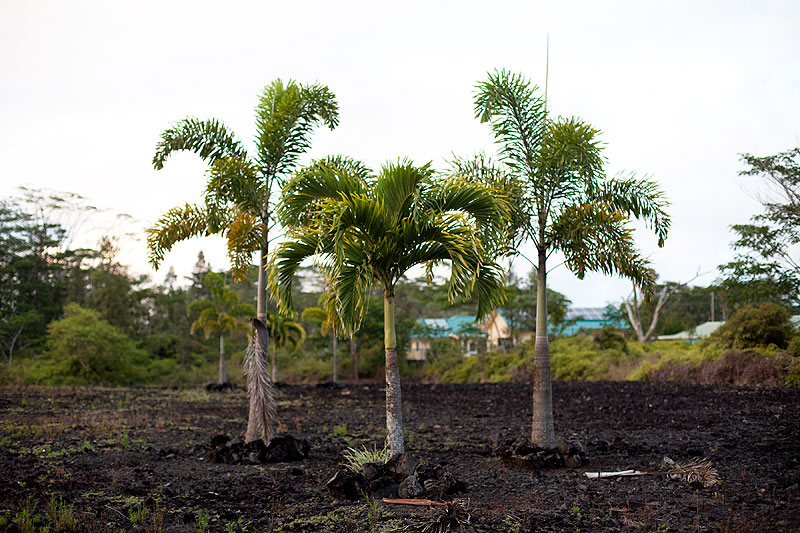 New Palms, 2012