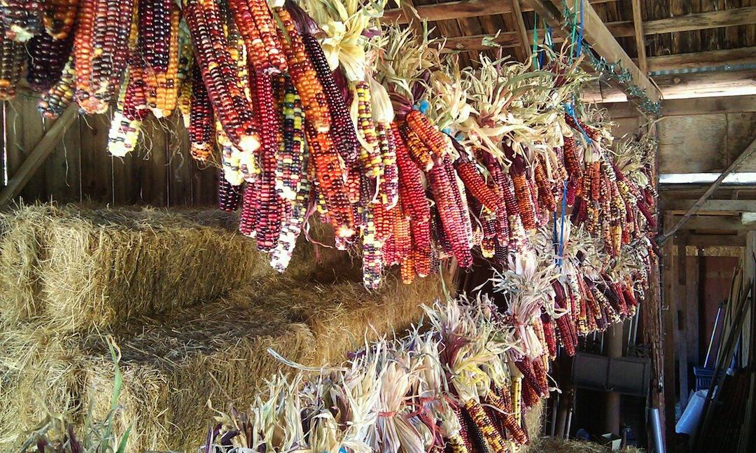 Corn Barn