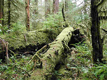 H.J. Andrews Experiemental Forest