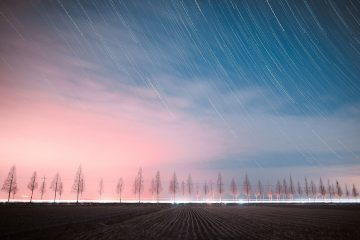 Winter stars and line of trees at twilight