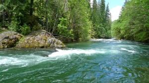 Oregon's Blue River