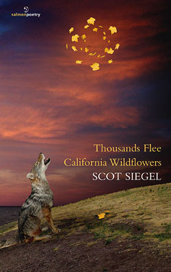 Thousands Flee California Wildflowers, by Scot Siegel