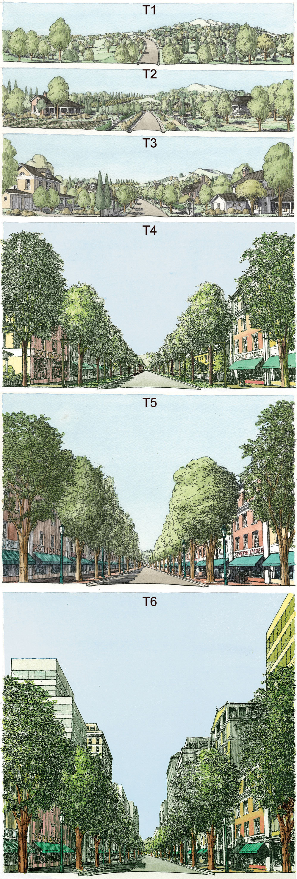 Successional urbanism: Transects