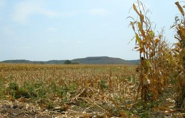 Corn vista