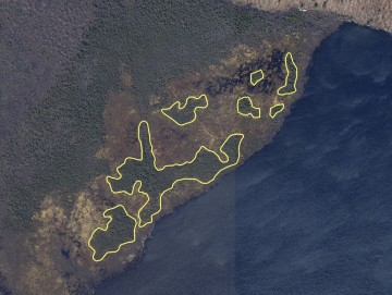 Atlantic white cedar bog delineation