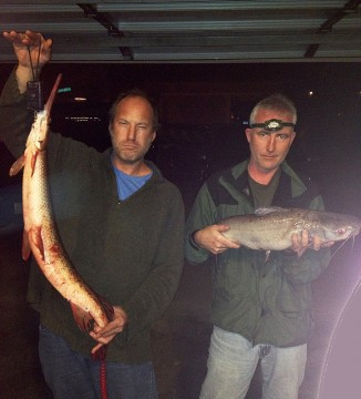 Hollywood and Minnow Bucket with gar and catfish