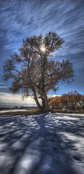 Bosque del Apache Cottonwood_1080