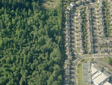 Subdivision backed to forest