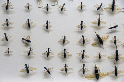 Unlabelled flying insects