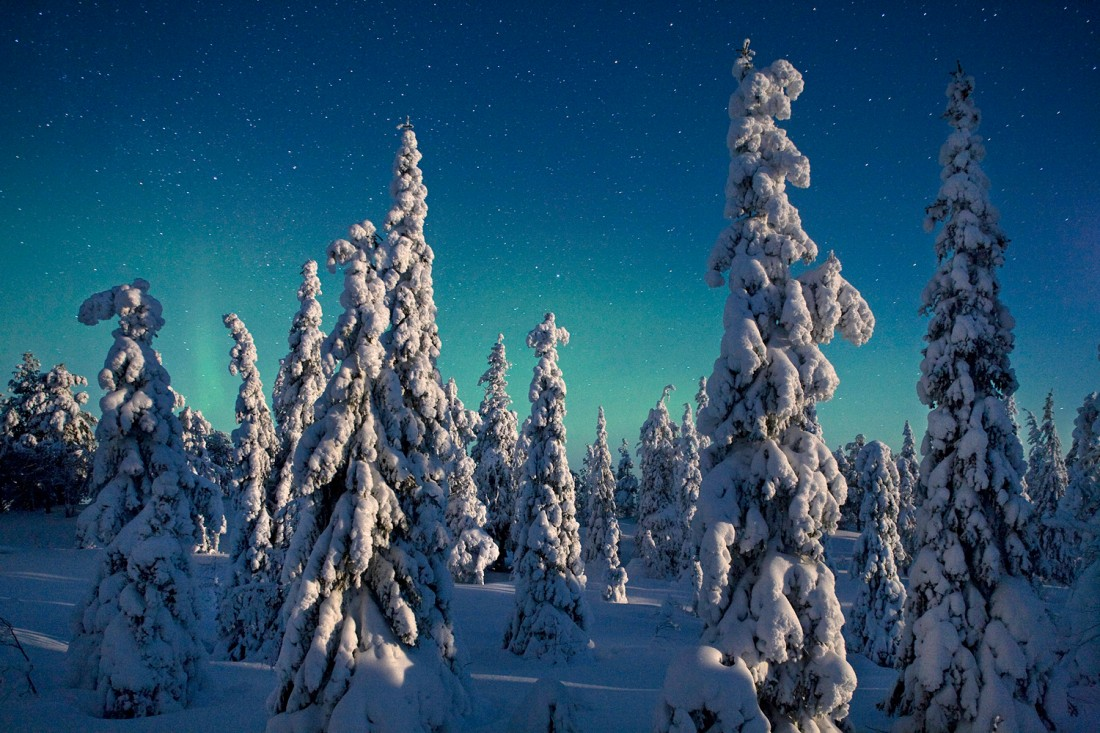 Moonlight on Spruce Trees, Oulanka National Park. Read more on Oulanka National Park in National Geographic. Photo by Peter Essick, courtesy National Geographic.
