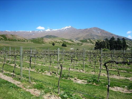 Central Otago vineyards. Photo by Liesl Nunn.