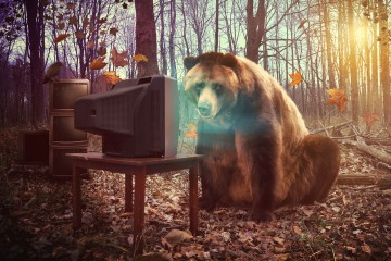 bear-watching-tv