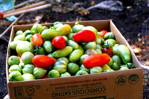 Tomatoes and tomotillos in a box