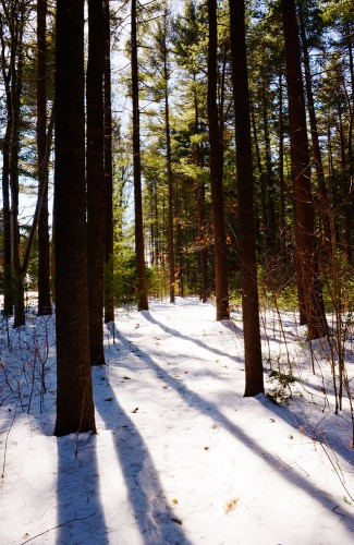 Winter woods. Photo by Yelizaveta P. Renfro.